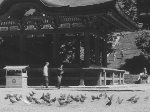 08.18 鎌倉-晚春-鶴岡八幡宮